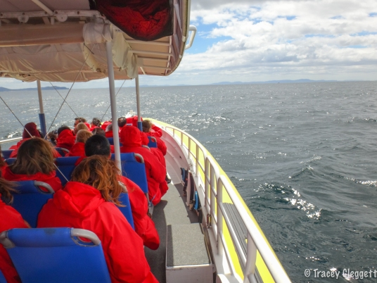 Heading out sea at Bruny Island