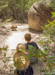 Wallaby's walking to Wineglass Bay Lookout
