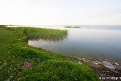 Lake Albert - No mozzies